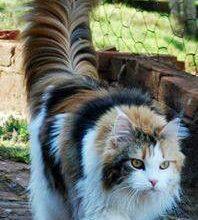 Menkun Katze Bilder 198x220 - Menkun Katze Bilder