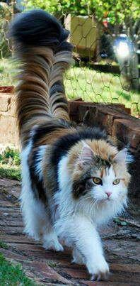 Menkun Katze Bilder - Menkun Katze Bilder