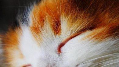 Most Funny Cats Bilder 390x220 - Most Funny Cats Bilder