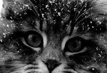 My Cat Photo Bilder 220x150 - My Cat Photo Bilder