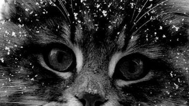 My Cat Photo Bilder 390x220 - My Cat Photo Bilder