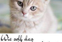 Neugeborene Katzen Bilder 220x150 - Neugeborene Katzen Bilder