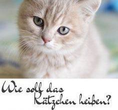 Neugeborene Katzen Bilder 236x220 - Neugeborene Katzen Bilder