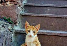 New Cat Images Bilder 220x150 - New Cat Images Bilder