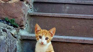 New Cat Images Bilder 390x220 - New Cat Images Bilder