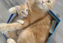 New Cat Photos Bilder 220x150 - New Cat Photos Bilder