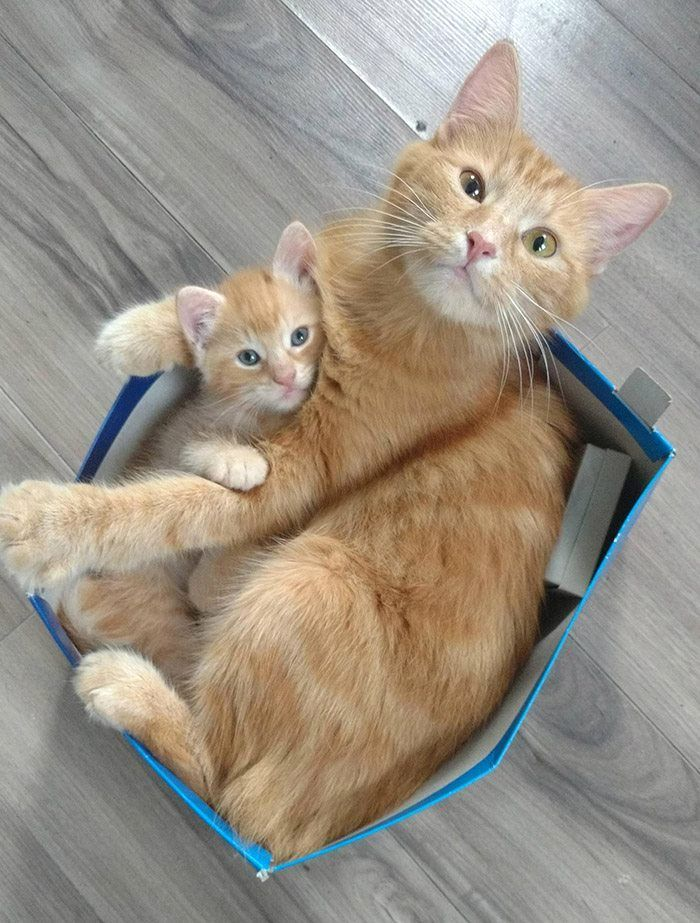 New Cat Photos Bilder - New Cat Photos Bilder