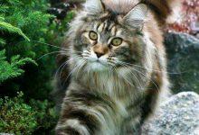 New Cat Pic Bilder 220x150 - New Cat Pic Bilder