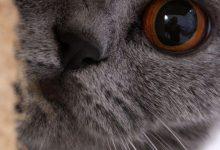 New Funny Cat Pictures Bilder 220x150 - New Funny Cat Pictures Bilder