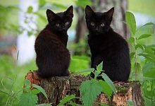 Nice Cat Photo Bilder 220x150 - Nice Cat Photo Bilder