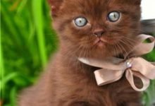 Niedliche Katzenbilder 220x150 - Niedliche Katzenbilder