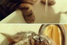 Okay Google Cat Pictures Bilder 220x150 - Okay Google Cat Pictures Bilder