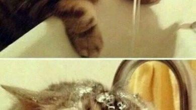 Okay Google Cat Pictures Bilder 390x220 - Okay Google Cat Pictures Bilder
