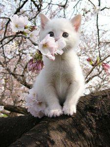 Okay Google Pictures Of Cats Bilder 225x300 - Okay Google Pictures Of Cats Bilder