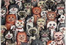 Pet Cat Pictures Bilder 220x150 - Pet Cat Pictures Bilder