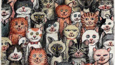 Pet Cat Pictures Bilder 390x220 - Pet Cat Pictures Bilder