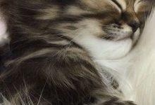 Photo With Cat Bilder 220x150 - Photo With Cat Bilder