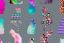 Photoshoot With Cat Bilder 220x150 - Photoshoot With Cat Bilder