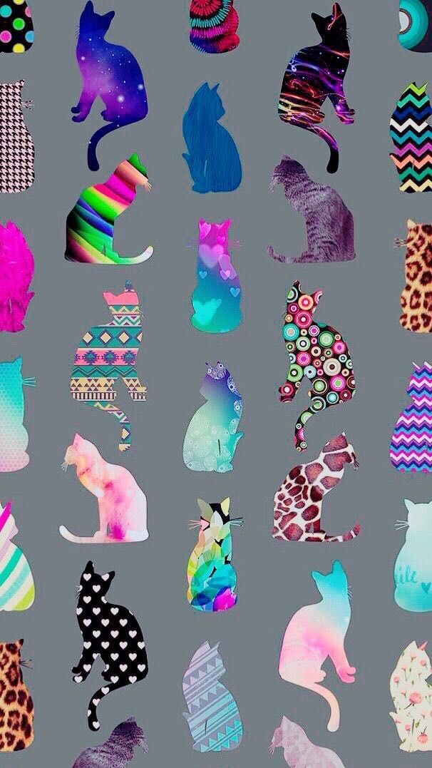 Photoshoot With Cat Bilder - Photoshoot With Cat Bilder