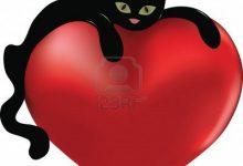 Pic Cat Com Bilder 220x150 - Pic Cat Com Bilder