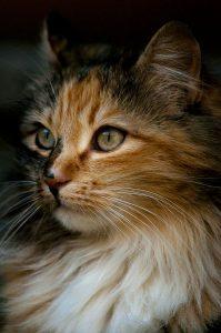 Pic Cats Kittens Bilder 199x300 - Pic Cats Kittens Bilder