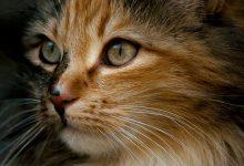 Pic Cats Kittens Bilder 220x150 - Pic Cats Kittens Bilder