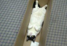 Pics Of Cute Cats And Kittens Bilder 220x150 - Pics Of Cute Cats And Kittens Bilder