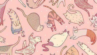 Pics Of Funny Cats Bilder 390x220 - Pics Of Funny Cats Bilder