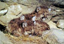 Pictures Of Baby Cats Bilder 220x150 - Pictures Of Baby Cats Bilder