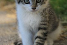 Pictures Of Beautiful Cats And Kittens Bilder 220x150 - Pictures Of Beautiful Cats And Kittens Bilder