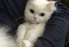 Pictures Of Cats Pictures Of Cats Bilder 220x150 - Pictures Of Cats Pictures Of Cats Bilder