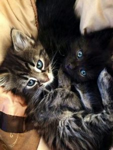 Pictures Of Cats Sitting Bilder 225x300 - Pictures Of Cats Sitting Bilder