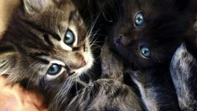 Pictures Of Cats Sitting Bilder 390x220 - Pictures Of Cats Sitting Bilder