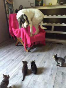 Pictures Of Dogs And Cats Bilder 225x300 - Pictures Of Dogs And Cats Bilder