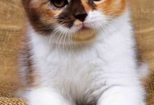 Pictures Of Kittens With Captions Bilder 220x150 - Pictures Of Kittens With Captions Bilder