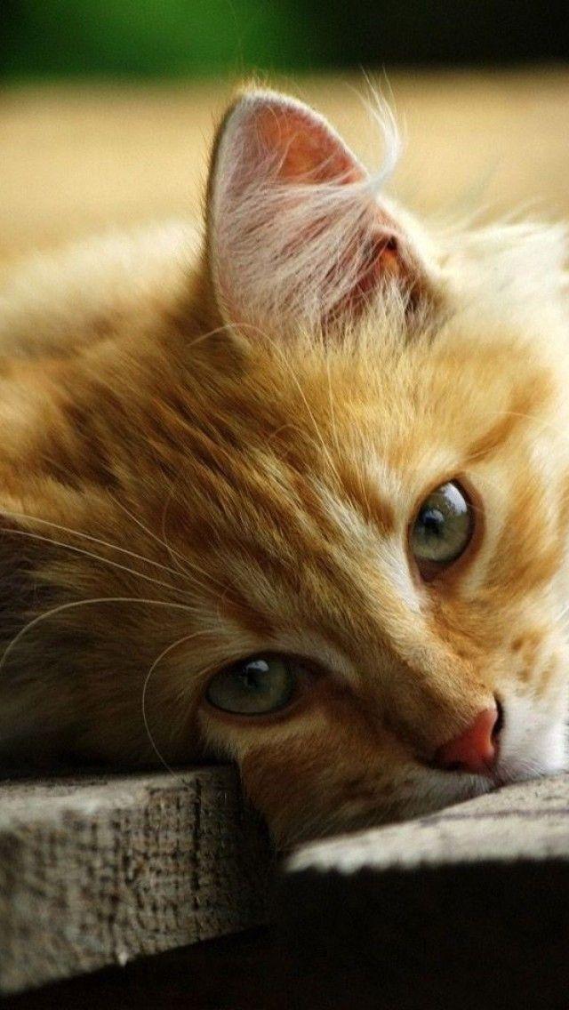 Pictures Of My Cat Bilder - Pictures Of My Cat Bilder