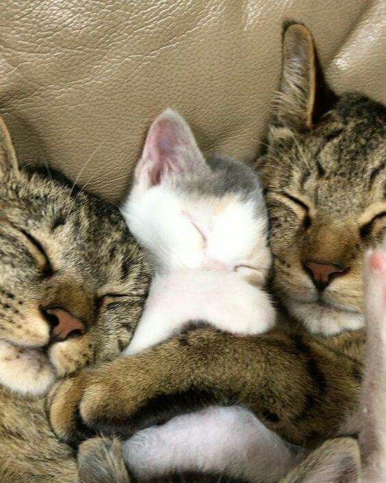 Pictures Of Pictures Of Cats Bilder - Pictures Of Pictures Of Cats Bilder