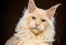 Poto Cat Bilder 220x150 - Poto Cat Bilder