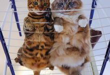 Real Cat Images Bilder 220x150 - Real Cat Images Bilder