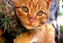 Real Cat Pic Bilder 220x150 - Real Cat Pic Bilder