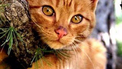 Real Cat Pic Bilder 390x220 - Real Cat Pic Bilder