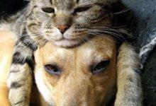 Real Cat Pictures Bilder 220x150 - Real Cat Pictures Bilder