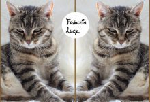 Really Cute Cat Pictures Bilder 220x150 - Really Cute Cat Pictures Bilder