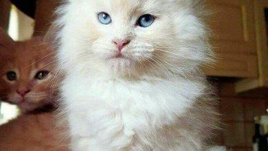 Really Funny Cat Pics Bilder 390x220 - Really Funny Cat Pics Bilder