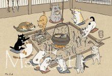 Ridiculous Cat Pictures Bilder 220x150 - Ridiculous Cat Pictures Bilder