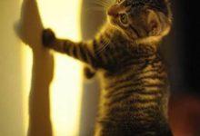 Süße Baby Katzen Bilder Bilder Kostenlos 220x150 - Süße Baby Katzen Bilder Bilder Kostenlos