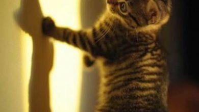 Süße Baby Katzen Bilder Bilder Kostenlos 390x220 - Süße Baby Katzen Bilder Bilder Kostenlos