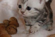 Süße Baby Tiere Bilder 220x150 - Süße Baby Tiere Bilder