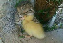 Süße Babykatzen 220x150 - Süße Babykatzen