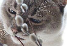 Süße Bilder 220x150 - Süße Bilder